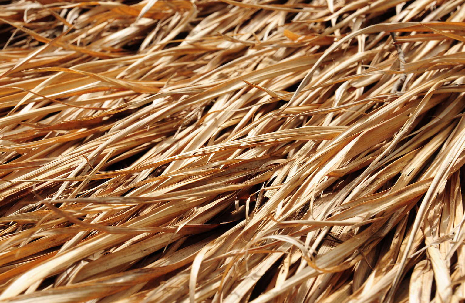 Straw Indicating Hair Is Dry And Brittle